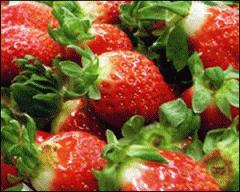 비타민 C가 풍부한 진주 매향 딸기