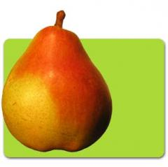 Korean pears / Hosui / Ya Pear / Snow Pear