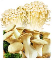 Enoki / eryngii / mushrooms