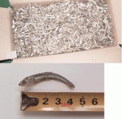 여수산 마른멸치 1.5kg/어획즉시 말린 최상품