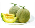 당과 칼슘, 인 등의 무기질 함량이 높고 비타민 함유량이 높은 피크닉 메론